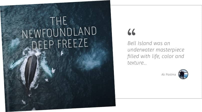 The Newfoundland Deep Freeze