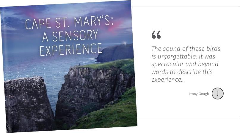 Cape St Mary's: A Sensory Experience