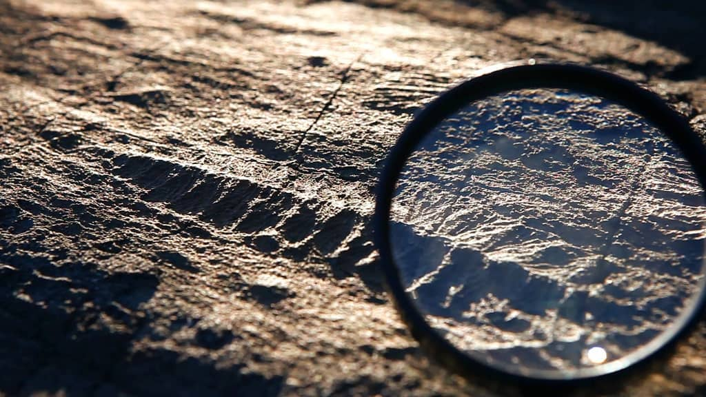 Viewing a fossil with a magnifying glass at Mistaken Point