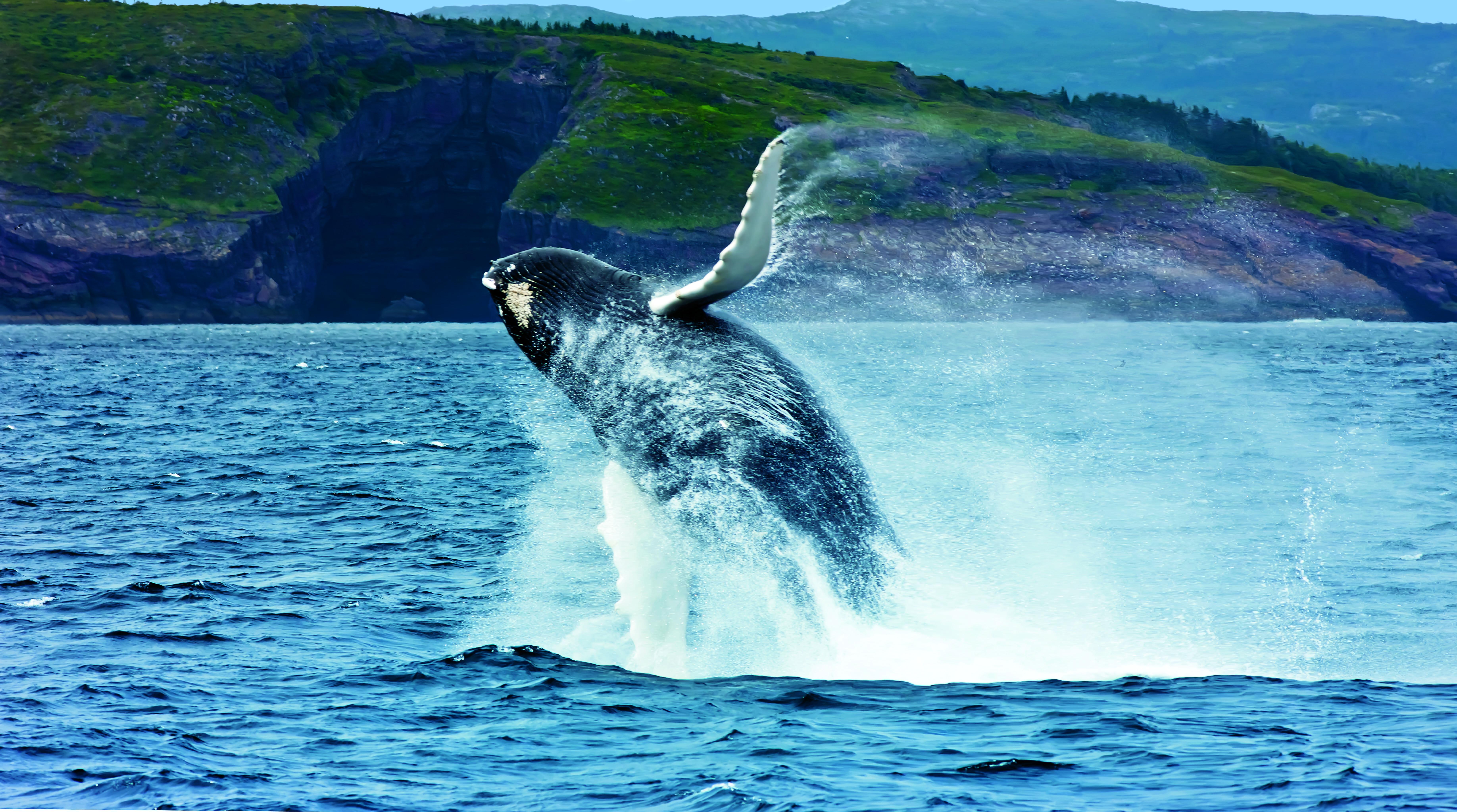 Whale Moves 101 - Newfoundland and Labrador, Canada