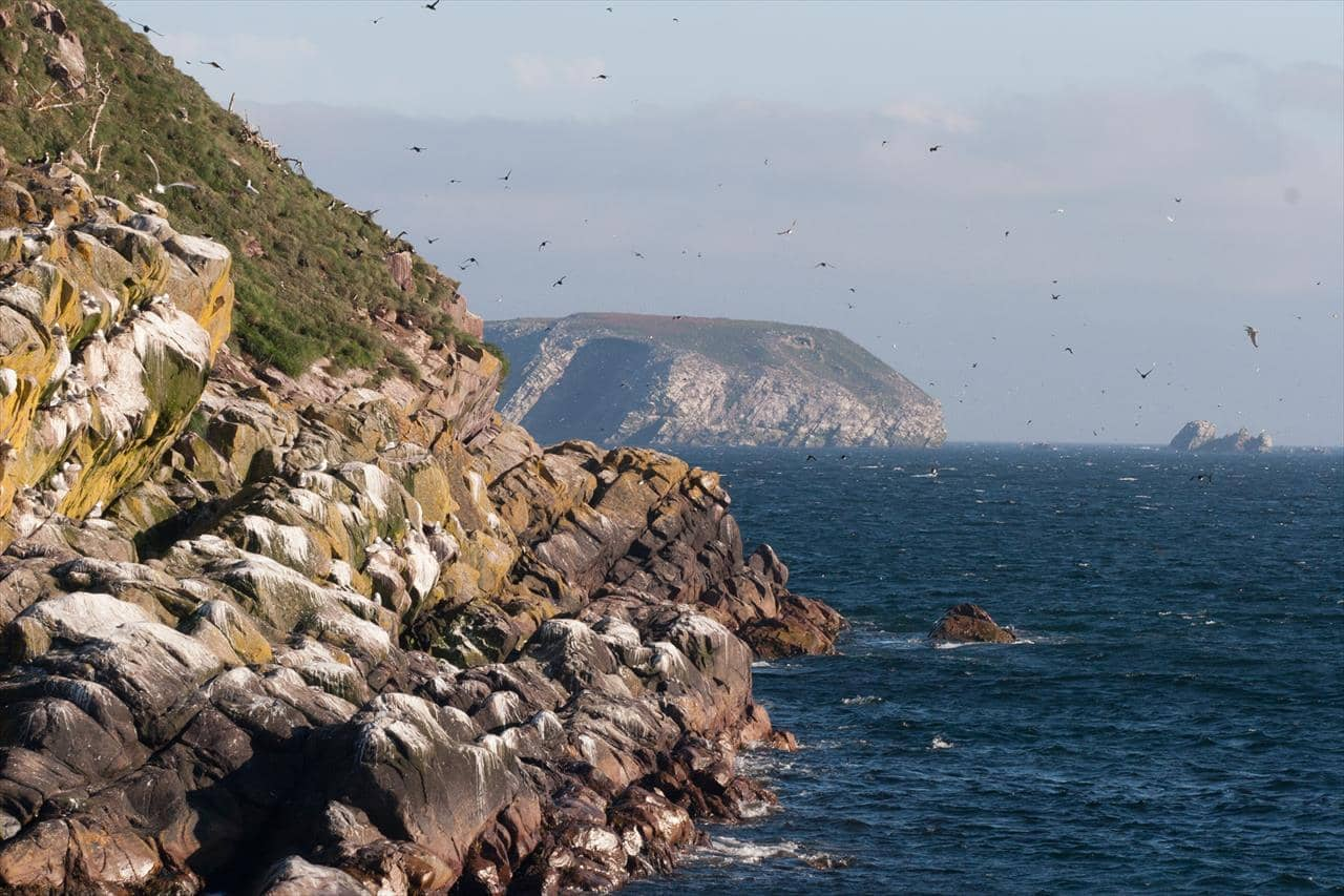 Birds on the Coastline