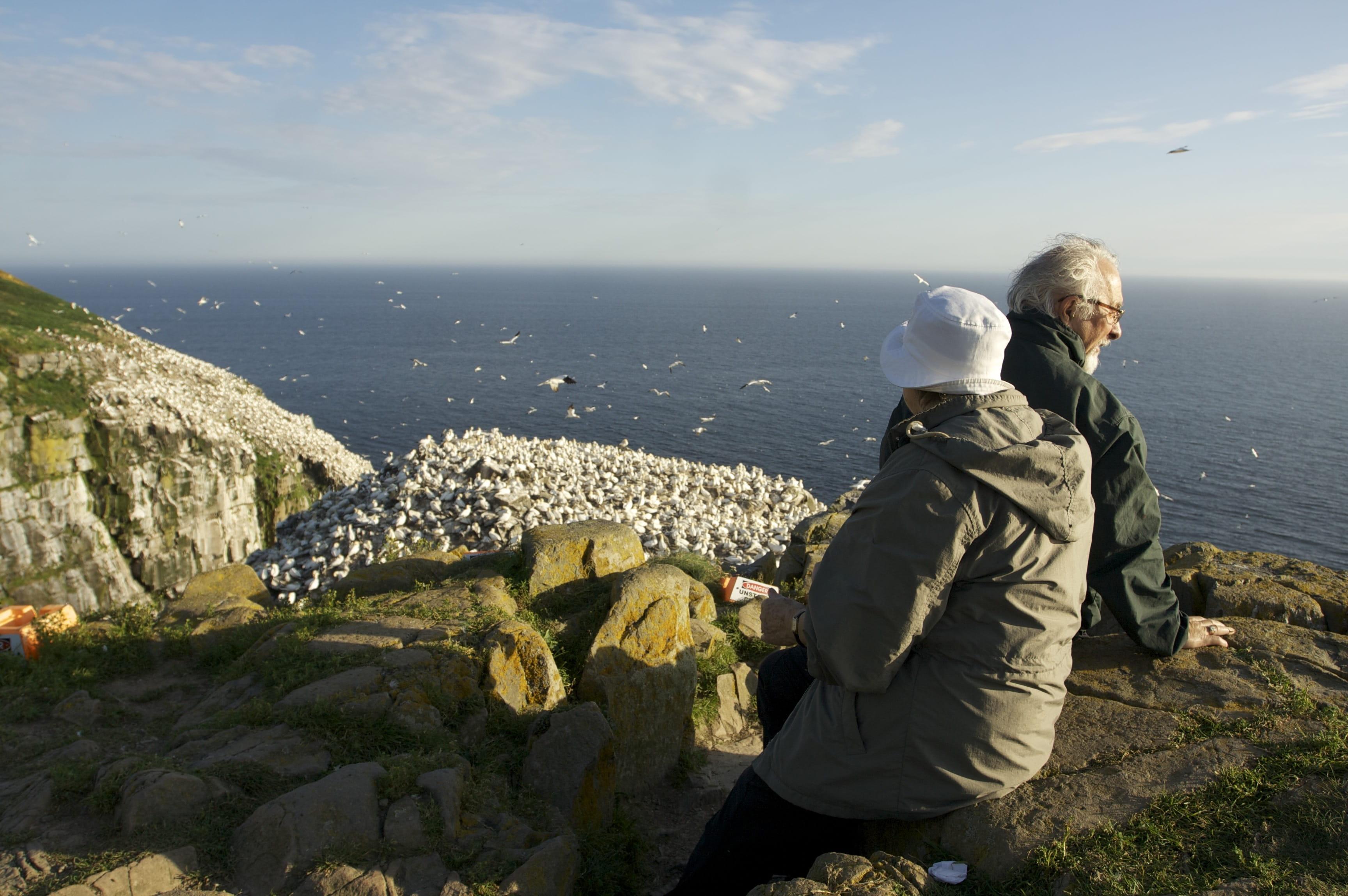 Witless Bay birdwatching