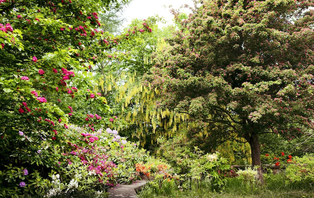 Doctor's House Garden