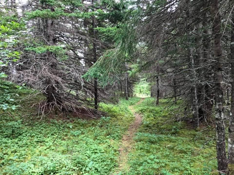 The path to the haunted graveyard in Julie's Harbour, courtesy of Badger Bay Boat Tours