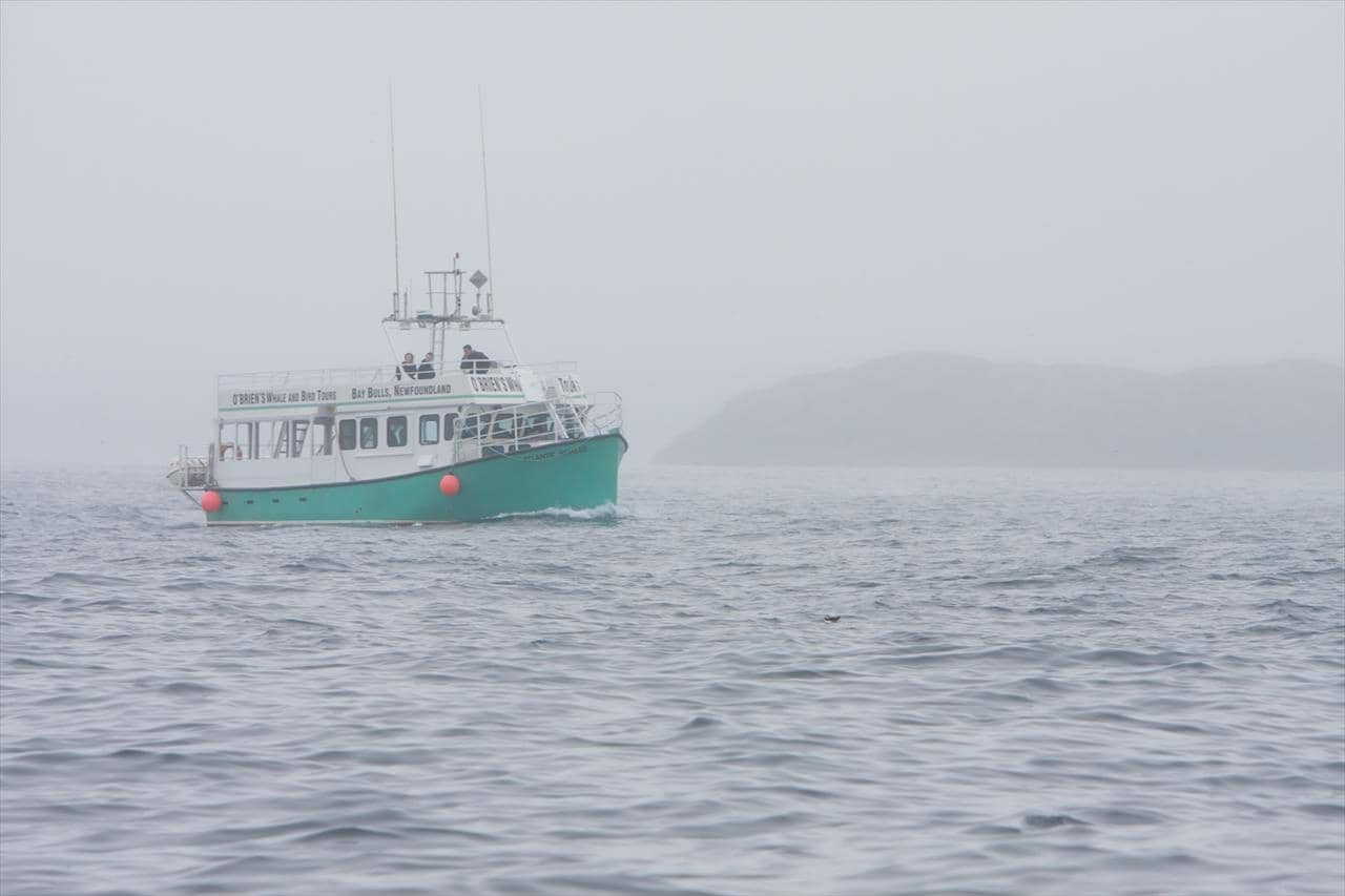 O'Brien's Whale and Boat Tours in Bay Bulls, Newfoundland & Labrador