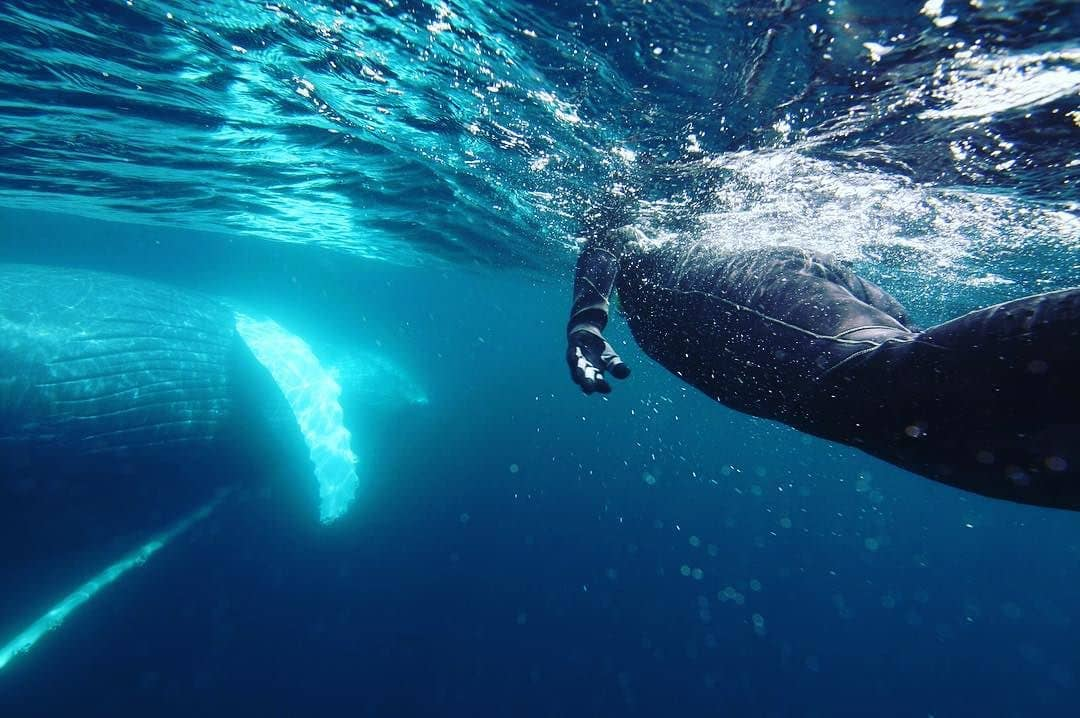Snorkeling with Whales