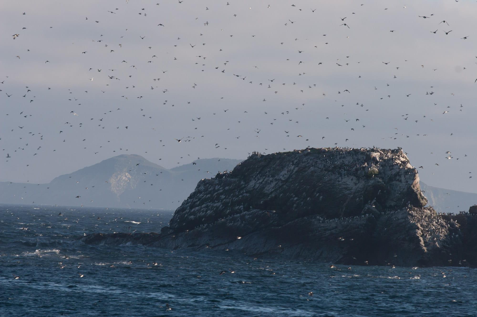 Sky full of birds